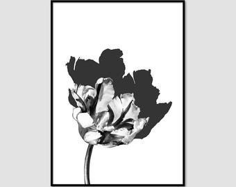 Flower Art, Tulip art print, Black and White Art, Fashion Wall Art, Home Decor #035