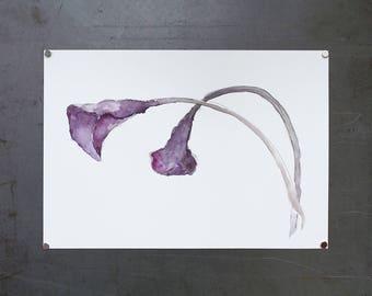 watercolor original painting | calla lilies 2
