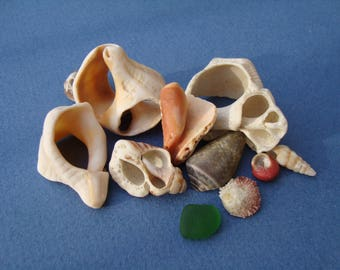Fragments of shells mediterranee-sea shell shards-supplies for crafts-jewelry supply-collectables