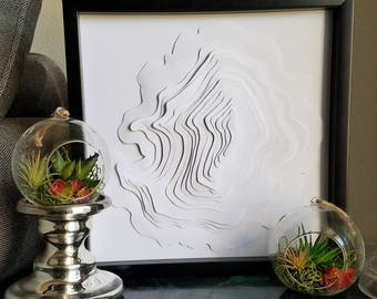 3D Tree Rings in Shadowbox