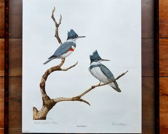 Dennis Puleston Signed Print, Dennis Puleston Art, Belted Kingfishers, Wildlife Art, Wildlife Prints, Dennis Puleston
