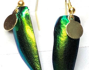 Elytra/gold earrings