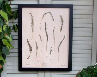 Fern Plant (1 of 2)