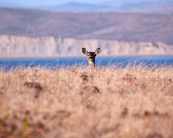 Deer at Chimney Rock