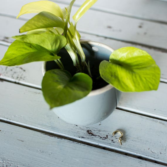 Wall Planter with Hook Ready to Ship