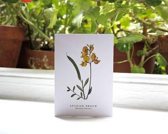 Spanish Broom: Greeting Card