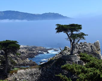 Cypress at Pebble Beach; Print photography, Pebble Beach, cypress, landscape,golf, California