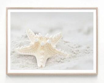 Seashell Photography, bathroom prints, nautical print, wall print art, coastal decor, large wall art, digital download, seashell printable
