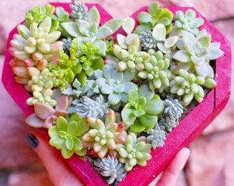 Succulent Heart Box