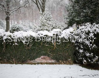 Digital Backdrop w/Snow, Digital Download, Digital Winter Backdrop, Digital Prop, Snow Scene, Christmas Backdrop, Composite Photography