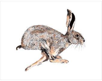 running hare wildlife photo