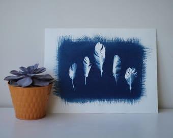 Cyanotype Feather Print