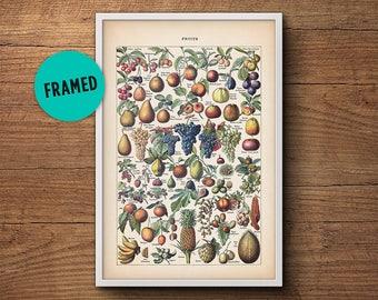 Fruit print, Framed art, Fruit illustration, Botanical print, Botanical fruit, Botanical illustration, Vintage Botanical art, Kitchen art