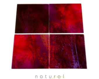 Glass Coaster Set, Coasters, House Warming Gift, Drinks Coasters, Nature Decor, Boho Chic, Bohemian, Botanical Decor, GC06