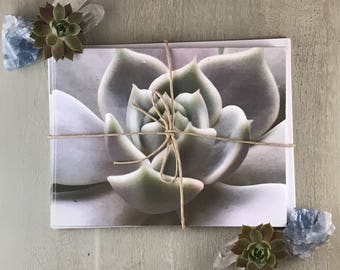 Purple Echeveria Blank Note Cards