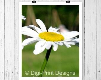 Daisy Wall Art, Country Decor, Botanical Photography, Modern Flower, Printed Home Decor, Botanical Print, Fine Art Photography, Daisy Print