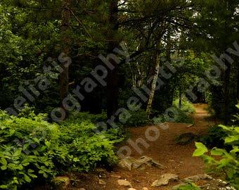 Duluth Chester Creek Trail Original Photograph 11x17 | DIGITAL DOWNLOAD | Photography, Art, Decor, Background, Gift