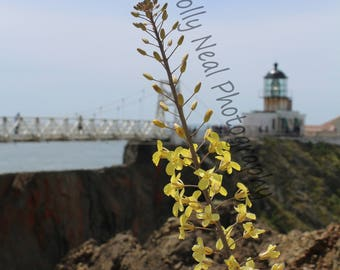Yellow Flower and Lighthouse
