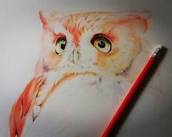 Hand drawn pencil Owl