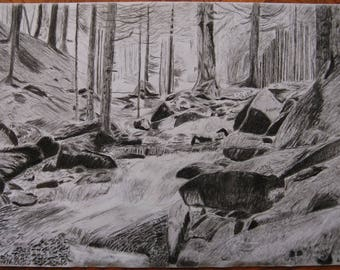 Original A3 Charcoal Drawing Listed by Self-Representing Artist, Forest Stream