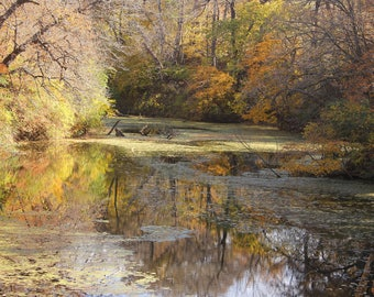 Fall Trees on Water Photo