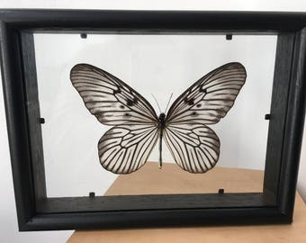 Butterfly Peleng Rice Paper Idea Blanchardi Kuhni Butterfly/insect/Taxidermy