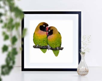 Black-Cheeked Lovebirds - limited edition signed print, framed or mounted