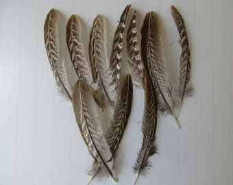 10 large 15 cm pheasant feathers