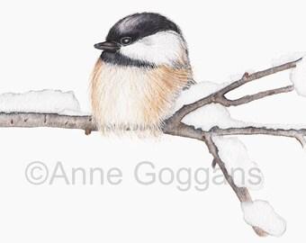 Black Capped Chickadee Bird Watercolor Print Watercolor Print 5x7
