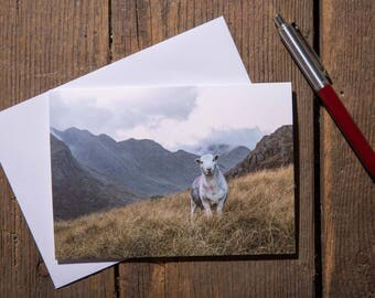 Stare Down With A Herdwick Sheep On Pike O' Blisco. The Lake District - Lake District Greeting Card