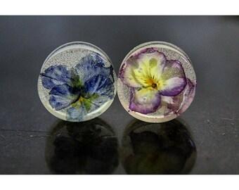 "1 1/4"" Pansy flower plugs"