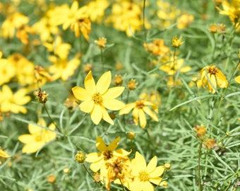 Yellow Flowers 5x7