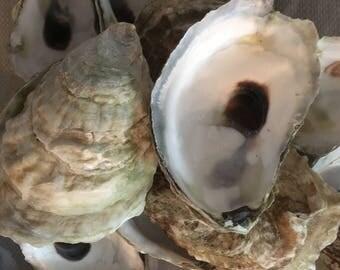 Two Dozen CUP Side Oyster Shells BULK
