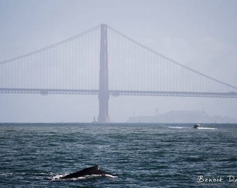 Photography of a whale 20x30cm near the Golden Gate Bridge in San Francisco