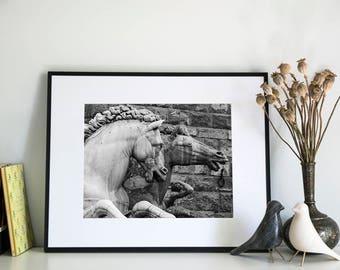 Italian Horses, Photographic Print, 11x14