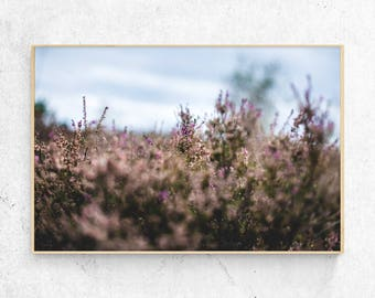 Flower field Photo Print, serenity, nature download