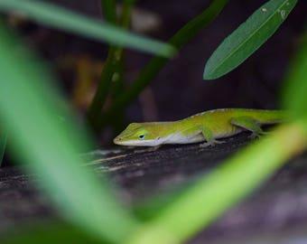 Trail Lizard!