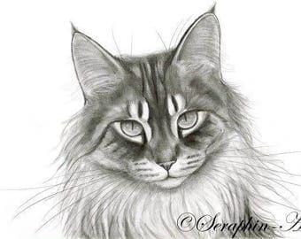 Maine Coon Cat Original Graphite Portrait
