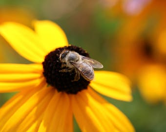 Flower and the bee, flower photography, insect photography, wall decor, macro photography, Digital download photography