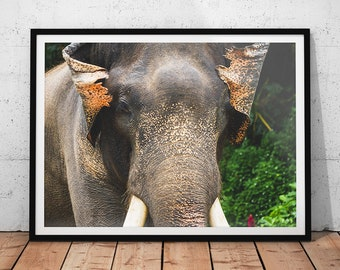 Asian Elephant Photo // Thailand Wildlife Photography Print, Nature Wall Art, Animal Home Decor, Asiatic Elephant Photo, Elephant Portrait