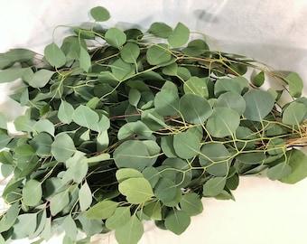 Fresh Eucalyptus silver Dollar Bunches-Bulk Greenery, Bulk Greenery, eucalyptus wedding, silver dollar, fresh eucalyptus, garland wreath