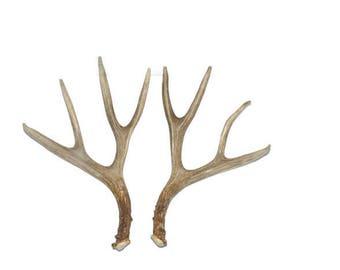 Deer Antler Set / Shed Antler / Natural Antler (#123)