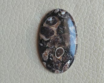 Natural Turritella Agate 38 Carat Cabochon, Turritella Agate Size 40x25x6 MM Approx, Turritella Agate Loose Gemstone, Jewellery Making Stone
