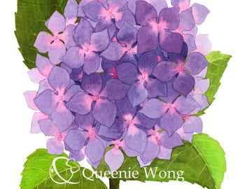 Watercolor, Art print of flowers, Painting of purple and pink Hydrangeas, 8x10 inch