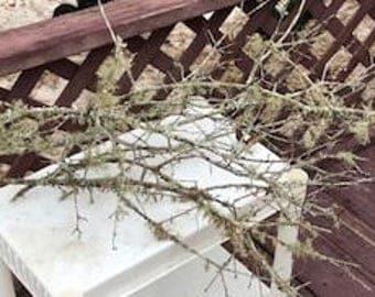 Lichen Moss Branches