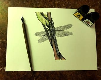 Pen and Ink Dragonfly Illustration Print