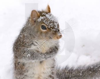 Squirrel in the Snow | Wildlife Photo Art | Wildlife Lover Gift | Fine Art Photography | Personalization | BDPhotoShoppe | Home Office Decor