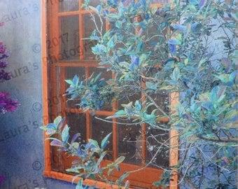 Window in Santa Fe, New Mexico