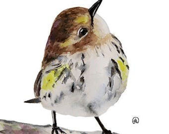 Cute warbler Bird art watercolor print