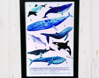 Whale and dolphin illustration print Poster